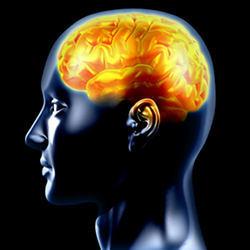 081313_BrainHarmonyCenter_brain.large