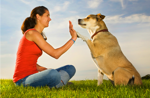 high-five-dog-with-human